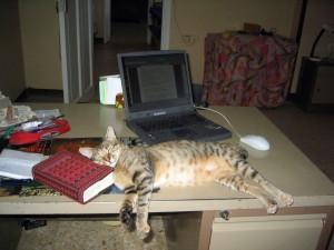 Paskalina schläft am Schreibtisch vor dem Notebook